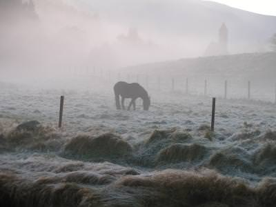 horse, fog, nature, eating, grass, fence, blury, animal, natura, hay, field, wilderness
