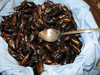 shells, scoici, oisters, mancare, food, spoon, lingura